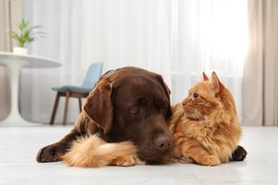 Can cats communicate with dogs?