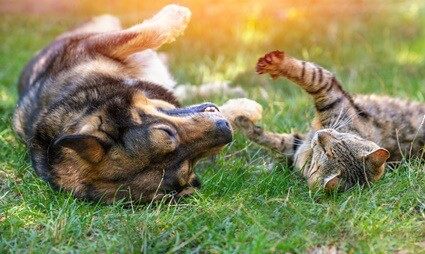 can cats and dogs talk to each other?
