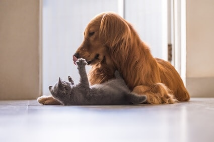 do dogs understand cats meows?