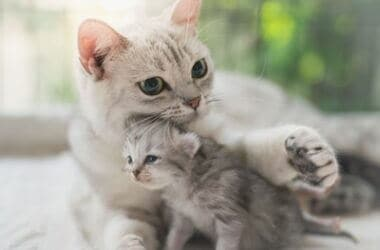 why do mother cats move their kittens?