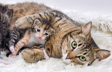 why does my cat keep moving one of her kittens?