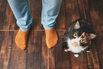 are male or female cats friendlier?