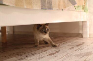 cat-acting-weird-after-being-outdoors