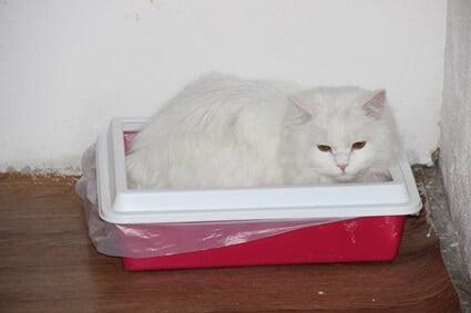 cat suddenly sleeping in litter box