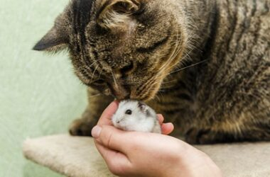 Are Hamsters Good With Cats?