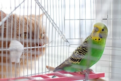 can cats and parrots be friends?
