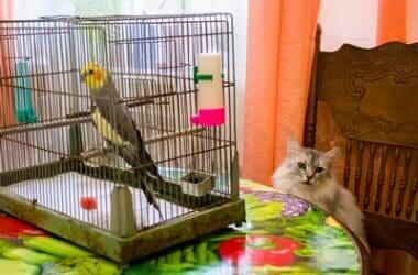 can-cats-and-parrots-get-along