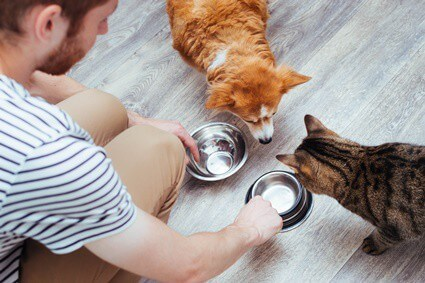 can cats eat canned dog food?