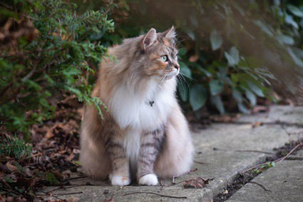 can cats move their tails voluntarily?