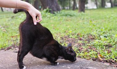 cat-has-dry-skin-on-back-near-tail