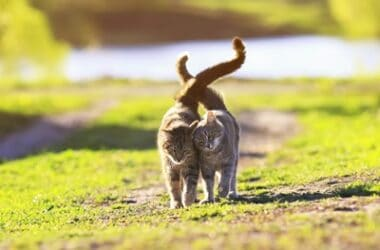 do cats do better alone or with another cat?