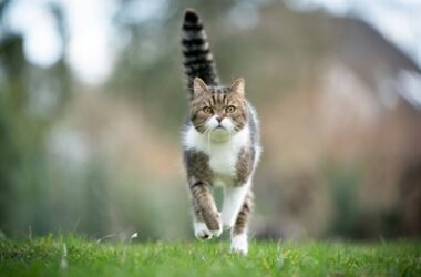 do cats have control over the movement of their tails?