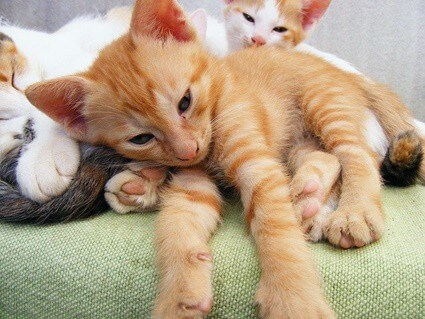 do cats remember their kittens years later?