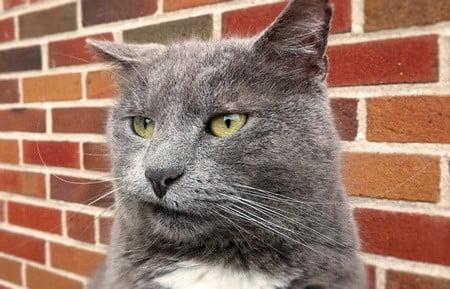 do cats sulk?