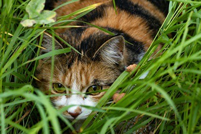 how-to-find-a-hiding-cat