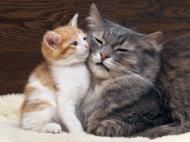 how to get older cats to accept kitten