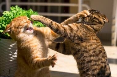how to stop cats fighting with neighbours cat