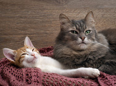 what's the best way to introduce a kitten to an older cat