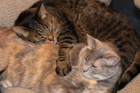 will cats remember siblings after being separated?