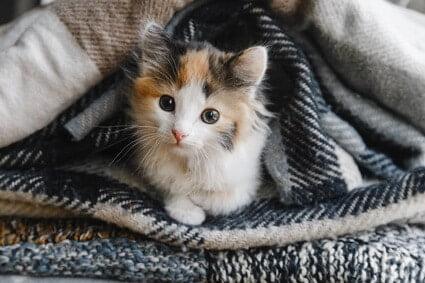 How long do kittens sleep at night?