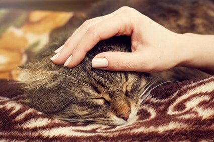 do cats like to be petted while sleeping?