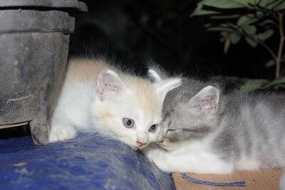 how to train your kitten to sleep through the night