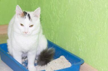 litter box training senior cat