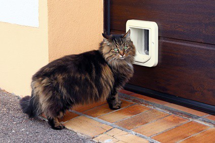 my cat has stopped using the cat flap