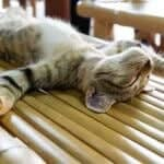 what does it mean when cats sleep on their backs?