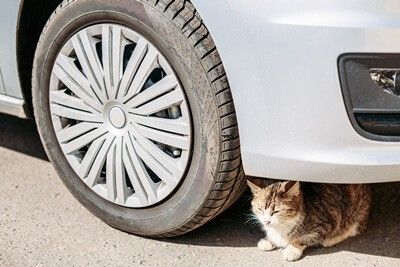 where can a cat hide under a car?