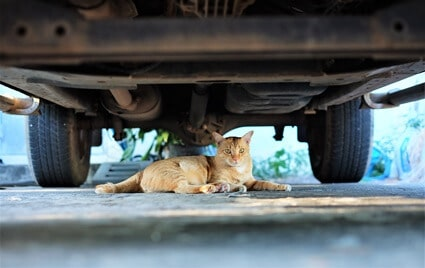 why do cats go under cars?