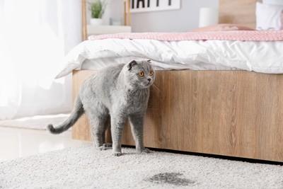 why does my cat's urine have a strong ammonia smell?