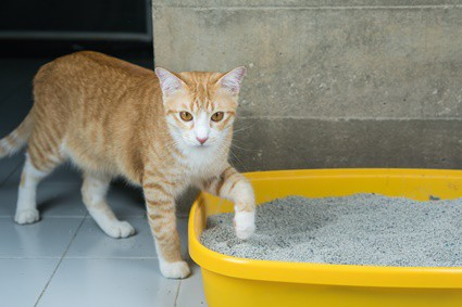why does my cat's urine smell stronger than usual?