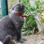 why is my cat smelling everything of a sudden?