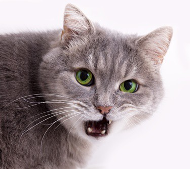why isn't my cat closing its mouth?