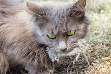 will-a-cat-get-rid-of-mice-in-my-house?