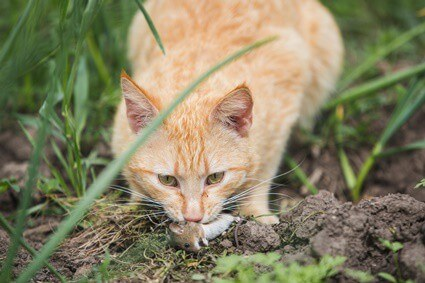 will mice stay away if you have cats?