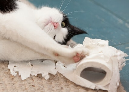 cats tearing up toilet paper