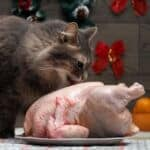 how to prepare raw chicken for cats