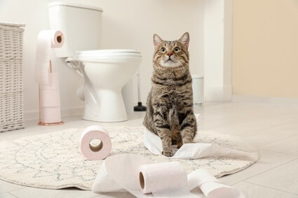 how to stop cat from unrolling toilet paper