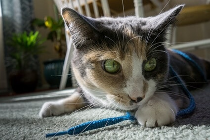 why can't cats resist string?