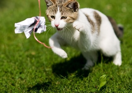 why do cats chase string?