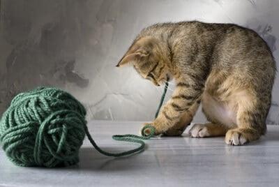 why do cats go crazy for string?