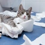 why do cats play with toilet paper?
