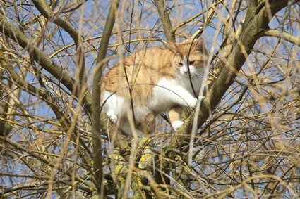 Can a cat climb down a tree on its own?