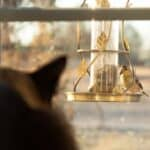 Why do cats make sounds when they see birds?