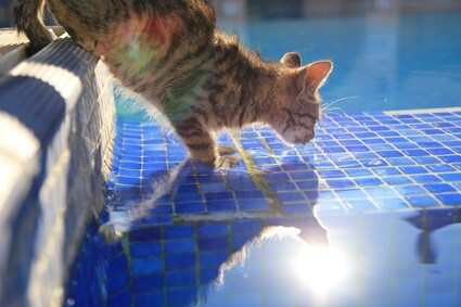 can a cat drown?