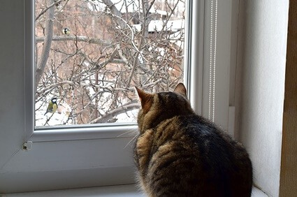 cats chattering to birds