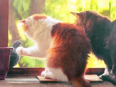 cats chirping like birds