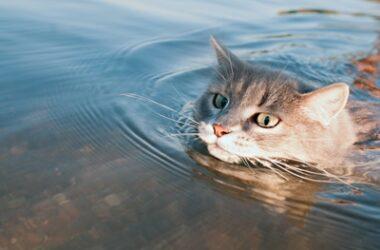 do cats instinctively know how to swim?